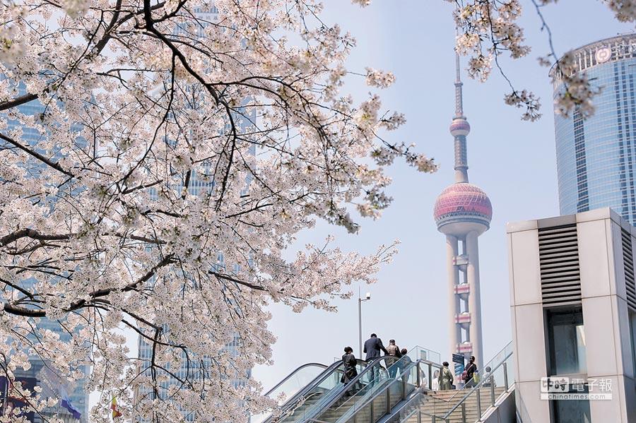 微軟亞太區總裁盛讚,上海是創新城市代表。圖為櫻花映照下的東方明珠塔。(新華社資料照片)