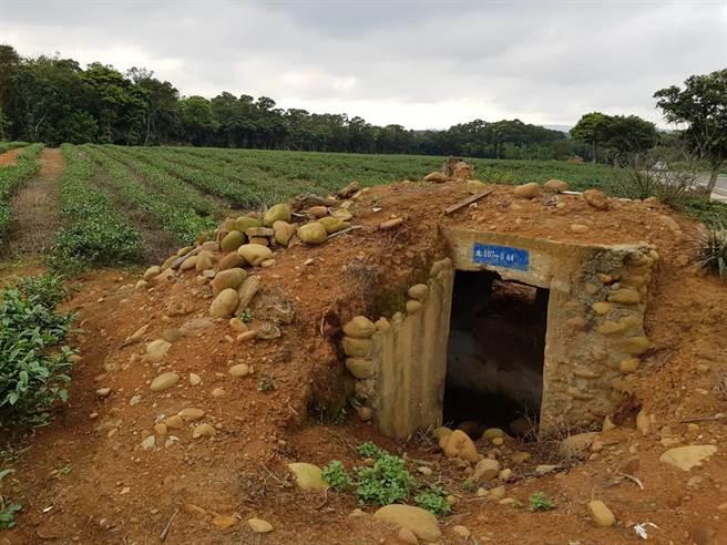 湖口鄉湖新路茶園遍布,與軍事壕溝遺跡並存,形成特殊場景,公所計畫活化周邊26公頃土地。(徐養齡攝)