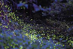 夜行螢光祕境