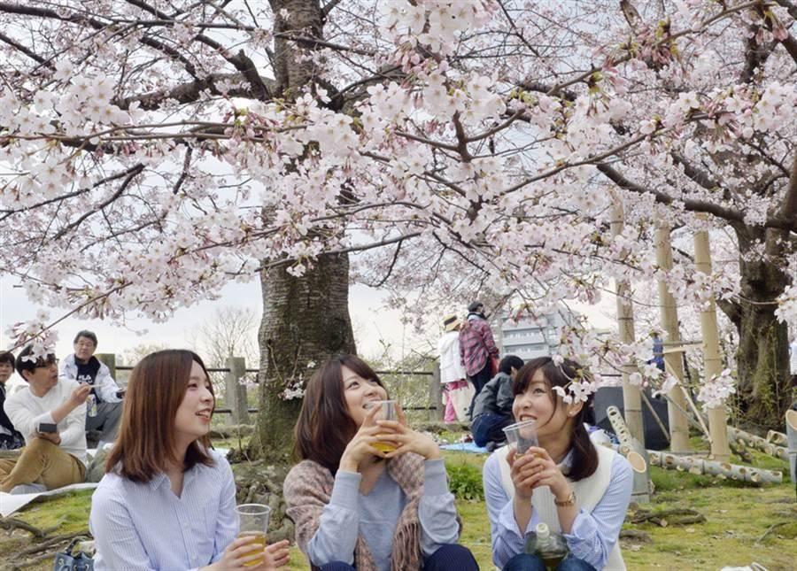根據調查,日本成為外國人最想來的觀光國家。圖為遊客在盛開的櫻花樹下賞花。(中央社)