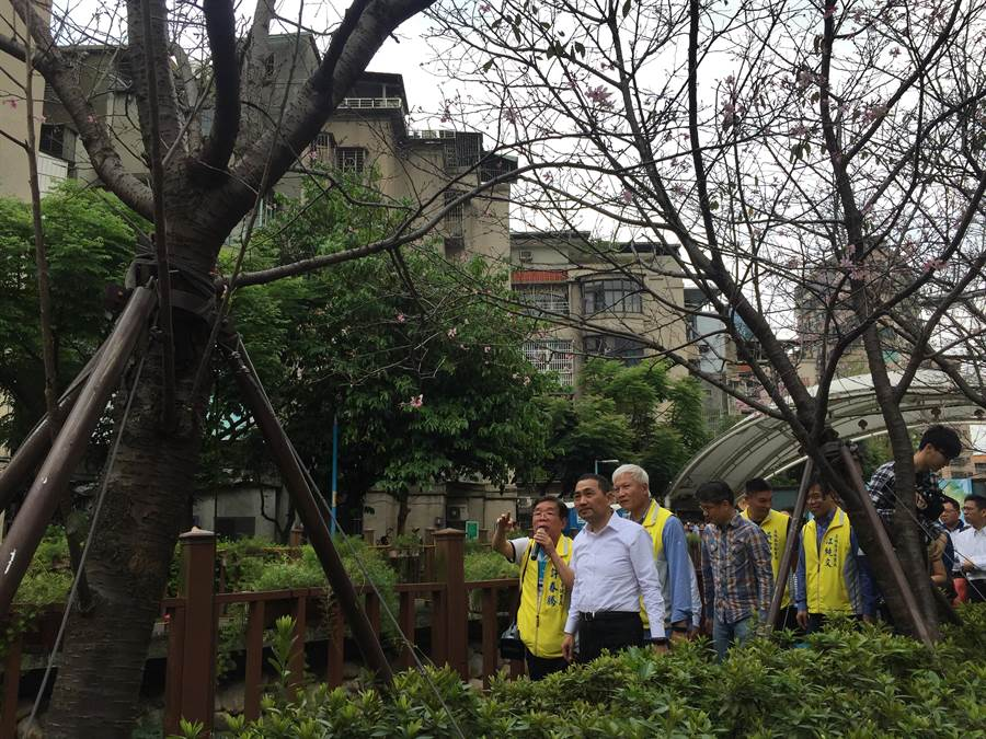 新北市長侯友宜6日前往土城著名景點「希望之河」賞櫻。(許哲瑗攝)