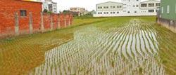 彰化農地汙染整治 35公頃拚復耕