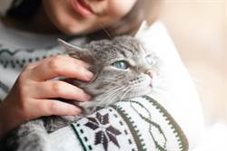 日本研究:貓能聽懂人類呼喚其名字