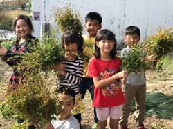 同安國小「STEAM菜園」種蕎麥 學童從產地餐桌看世界