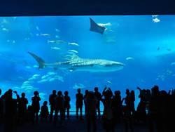 吃素?為何海生館鯊魚不吃其他魚