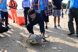 綠蠵龜「達達」回家了!海生館:牠的糞便中有好多塑膠垃圾