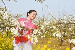 又是一年梨花開 到江蘇豐縣來看海