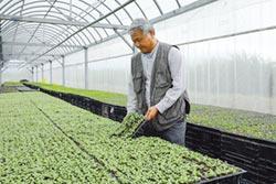 花東縱谷奇萊美地有機農園 種出鮮甜美味蔬果