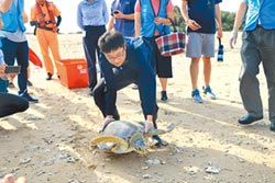 綠蠵龜達達康復 野放回大海