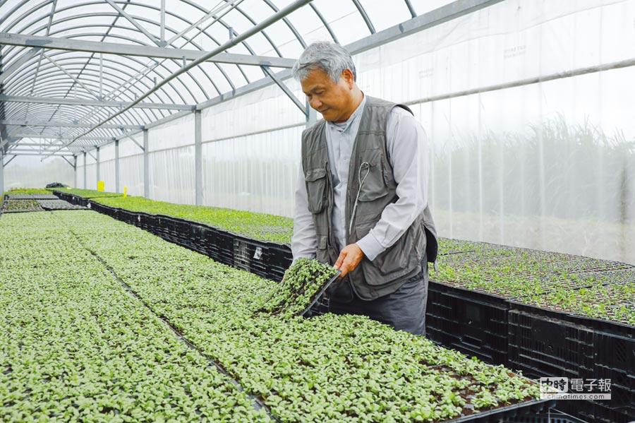 「奇萊美地」有機農園蔡志峰用心呵護種植的蔬果。圖/吳漾提供