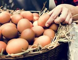 英國年丟逾7億雞蛋 原因難以想像