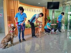 幫浪浪找頭路 台南市首創毛小孩職訓與就業輔導中心