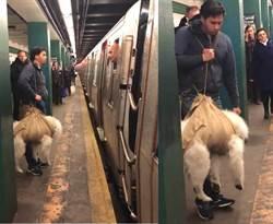 狗裝袋能上地鐵 他這樣提狗被拒載