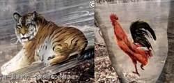 花錢看野生動物 只見塑膠圖掛樹上