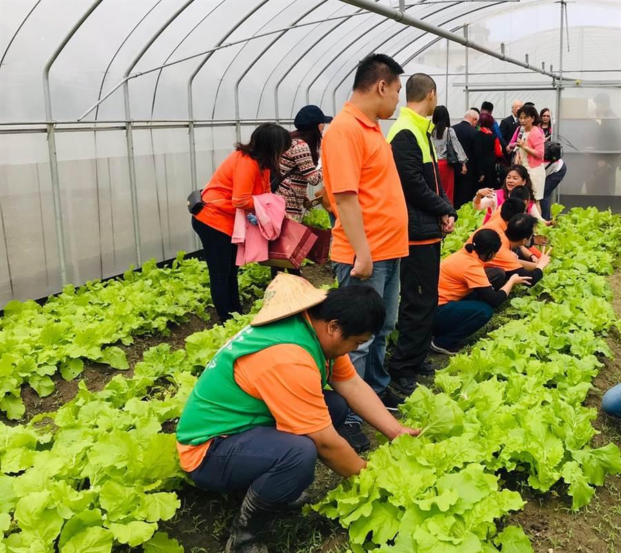 在國際扶輪基金會資金挹注下,新竹市愛恆啟能中心籌畫的專業農作網室12日落成啟用。(陳育賢攝)