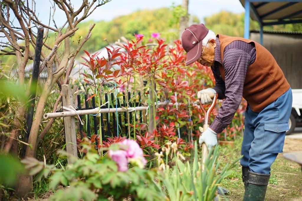 日本不少老年人,喜歡在自家庭院做園藝(示意圖/達志影像)