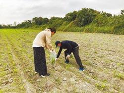 六輕氣爆 雲縣府採農田土壤送化驗