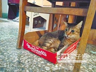 新堀江貓窩 有貓有愛好悠哉