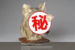 3D模擬!4500年前狗狗長這樣