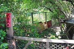 與石虎和平相處 保育協會擬改建100戶雞舍