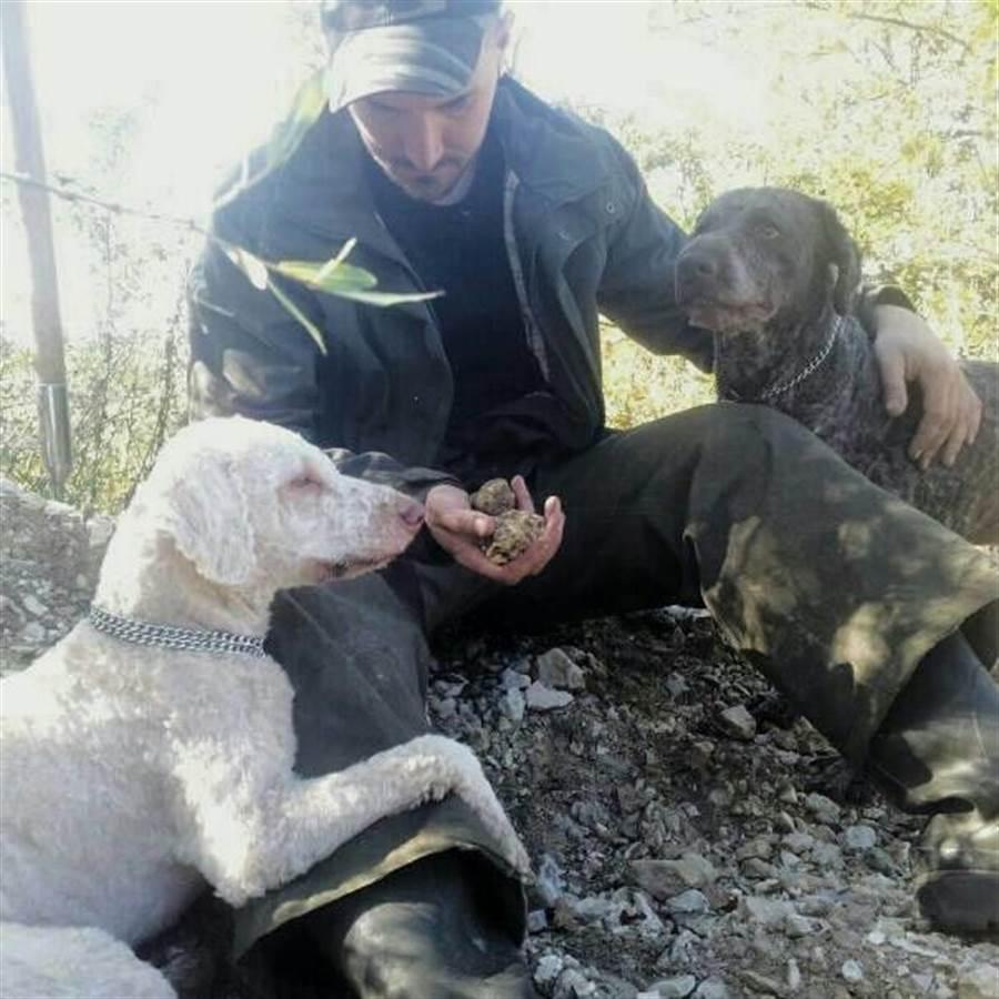 嘴巴戴金屬套是為了保護狗狗(圖片取自/Francesco Palmiero FB)