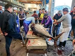 小漁船發大財 黑鮪魚一次抓四尾賣85萬