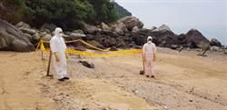 全球剩千隻 馬祖連3天死亡保育鯨豚漂岸