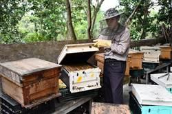 總經理變老農夫 何信海養蜂開拓一片天