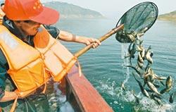 長江黃河放流魚苗 修復水域生態