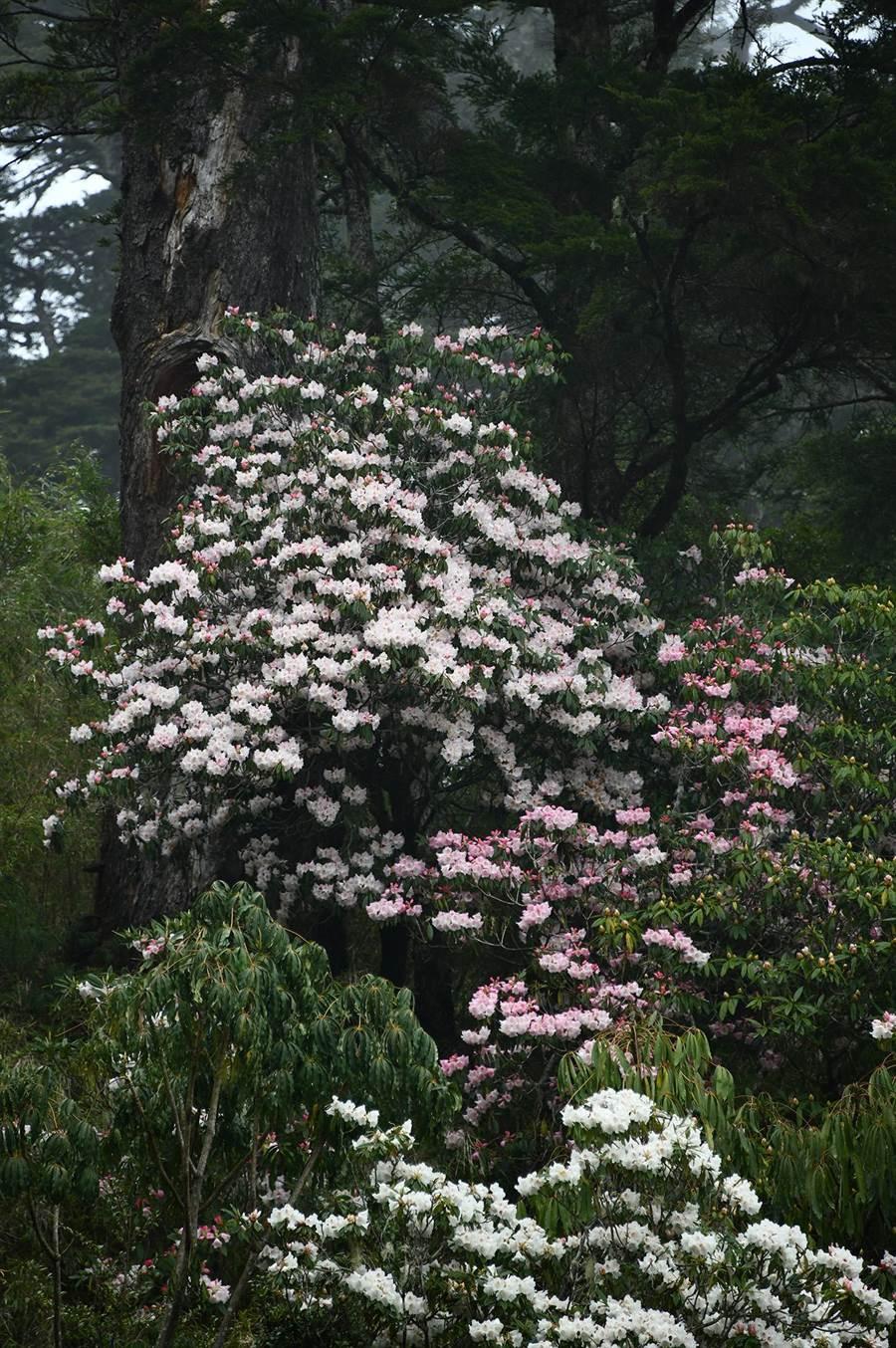大鐵山附近花瀑壯觀。(沈揮勝攝)