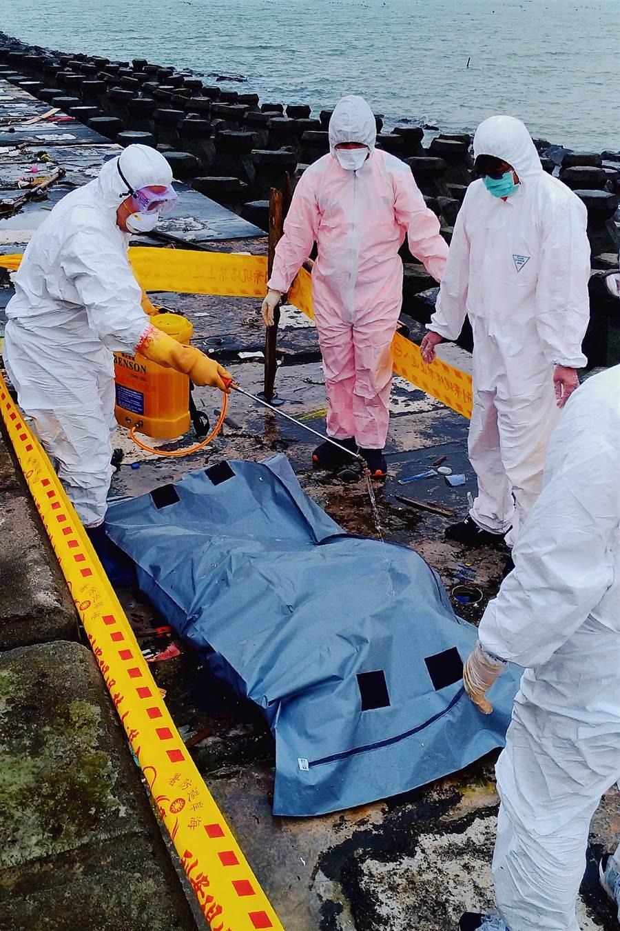 連江縣南竿清水沃岸際4月4日發現1頭確診非洲豬瘟海漂豬。(防檢局提供)
