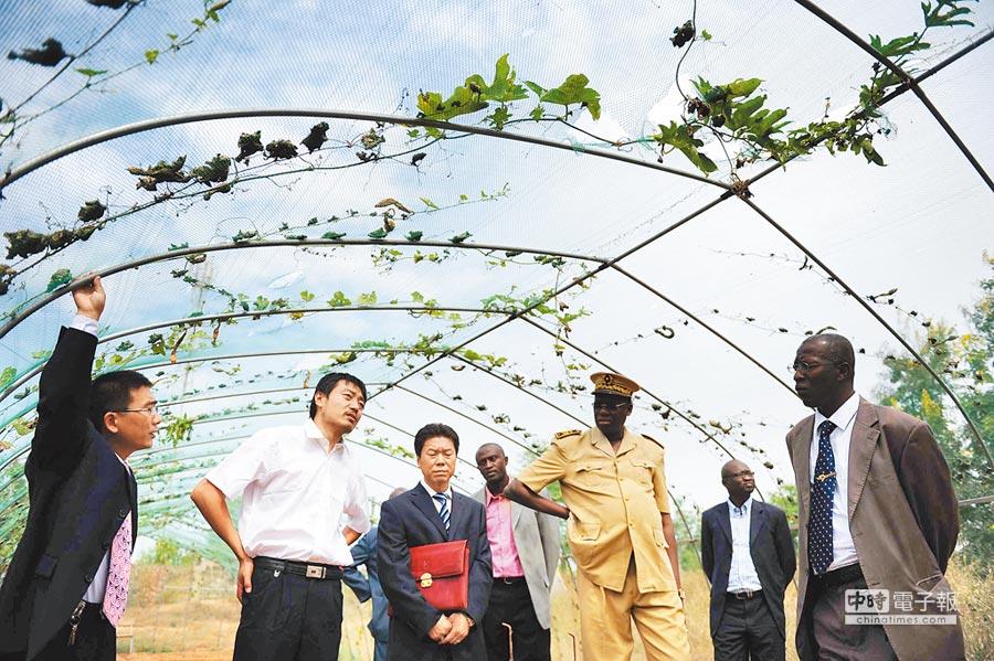 塞內加爾的大陸農業技術示範基地,大陸農業專家向塞方官員介紹防鳥網的作用。(新華社資料照片)