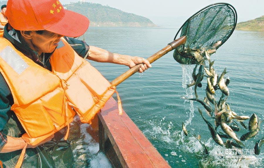 河南洛陽漁政工作人員向黃河小浪底水域投放魚苗。(新華社資料照片)