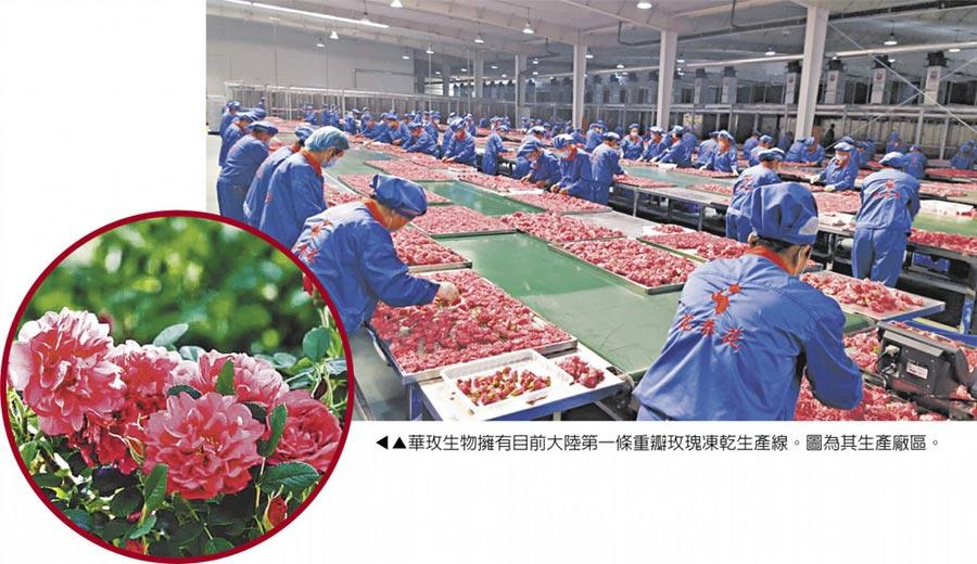 華玫生物擁有目前大陸第一條重瓣玫瑰凍乾生產線。圖為其生產廠區。