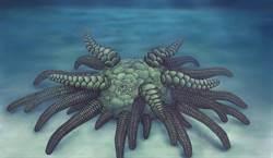 發現4億年前物種 是美味海鮮祖先