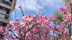 永慶房屋是在地好鄰居 報你近百個賞櫻打卡點