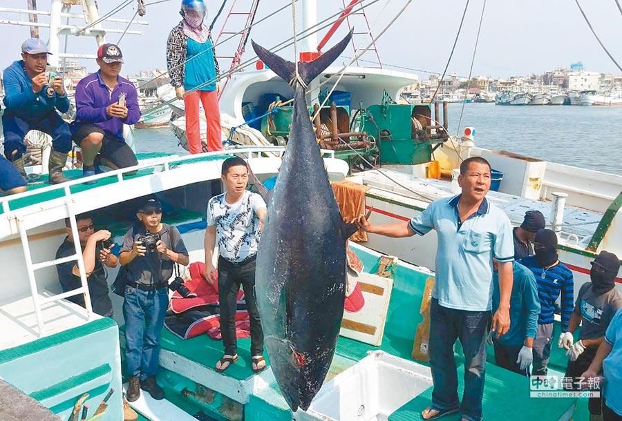 屏東第一鮪爭奪戰是船長的面子和裡子之爭,圖為2018年東港籍漁船「魚來滿6號」捕獲第一鮪。(本報資料照片)