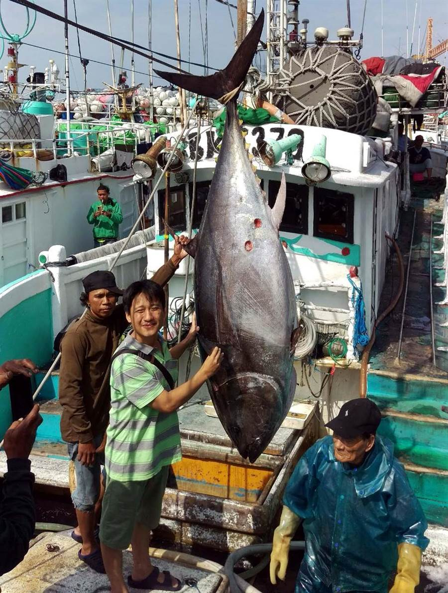 琉球籍漁船「滿大豐2號」捕獲第一鮪,船長洪百鋐(中)第一次捕到第一鮪,非常開心。(潘建志攝)