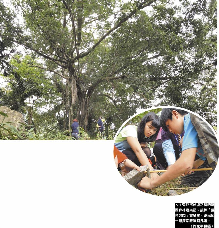 有巨榕祕境之稱的富源森林遊樂區,接棒「螢光閃閃」賞螢季,邀民眾一起探索原味阿凡達。(許家寧翻攝)