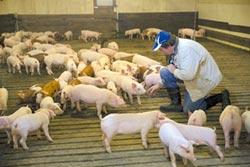 談判新戰場 陸擬增加進口美豬、家禽