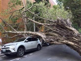 花蓮強震  北檢外路樹連根拔起 壓壞車頂