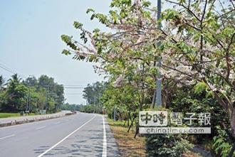 屏東道路 打造南國氛圍