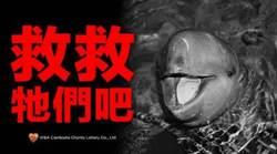 柬埔寨唯一官方公益彩券 守護貧窮孩童與江豚