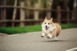 愛犬亂竄導致車禍 飼主過失傷害起訴