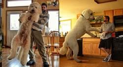 驚見2百公斤巨犬?影片曝光網看傻