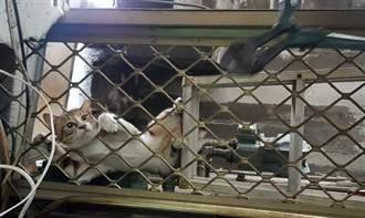 貓咪卡鐵窗表情超哀怨 救援隊緊急解圍