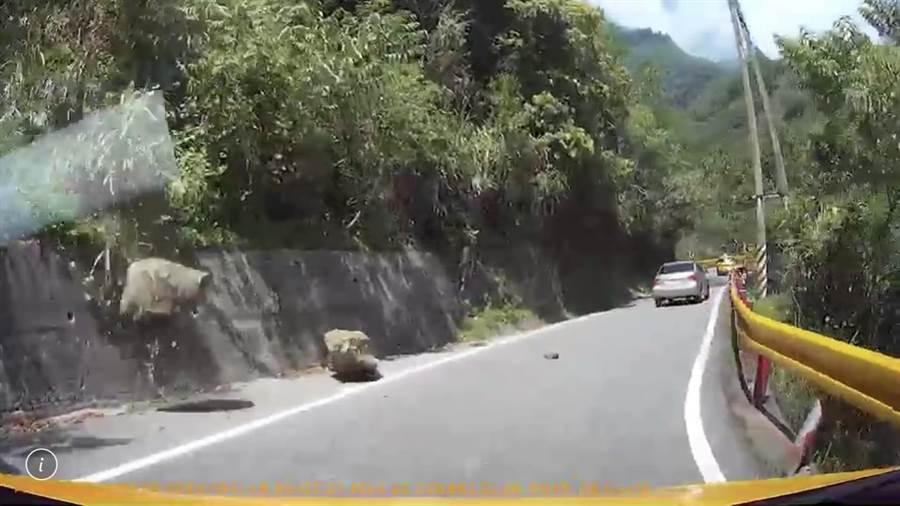 才刚闪过大落石,又有两块落石滚落路面。(张祈翻摄)