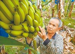 創新無人機空拍勘損 富邦產香蕉保單 首開賣