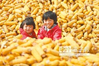 中美穀物關稅攻防 WTO判陸敗訴