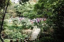 把握機會快來新竹桐花祭!古橋光雕秀超吸睛